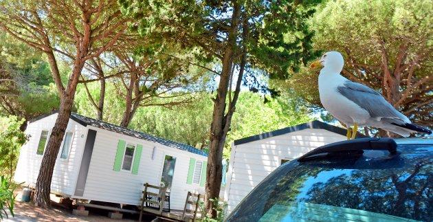 mouette camping le garden